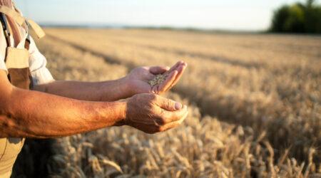 La blockchain applicata al settore agrifood: maggiore sostenibilità e minore spreco